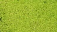 Bog. Green background video