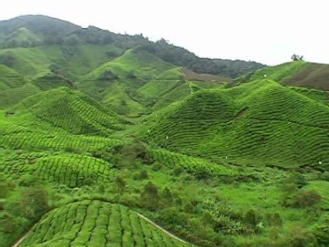 Boh Tea Plantations video