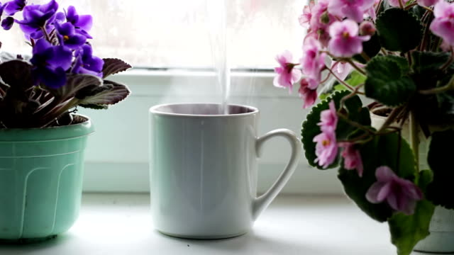 Boiling water is poured in cup.cup of coffee tea hot drink on window sill next to a beautiful home flower in a pot video