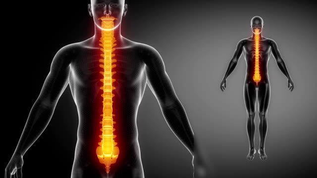 SPINE  bone skeleton x-ray scan in black video