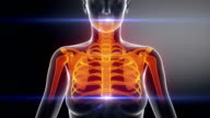 SKELETON  bone skeleton x-ray scan in black video