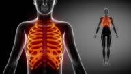RIBS  bone skeleton x-ray scan in black video