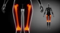 FEMUR bone skeleton x-ray scan in black video