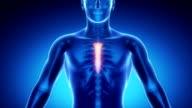 STERNUM bone skeleton x-ray scan in blue video