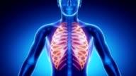 RIBS bone skeleton x-ray scan in blue video
