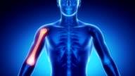 HUMERUS bone skeleton x-ray scan in blue video