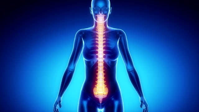 SPINE  bone skeleton x-ray scan in blue video