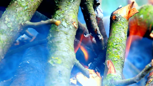 bonfire, branches are burning video