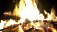 Bonfire night trees video