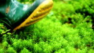 Boots - Stepping Through Moss And Green video