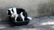 Border Collie Cooling off in Tub video