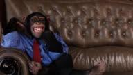 Boss Chimp Big Smile video