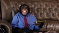 Boss Chimp Cigar Smile video