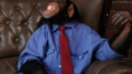 Boss Chimp Shacking Head video