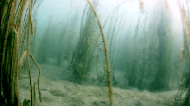 Bottom of a Fresh Water River with Current video