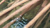 bottom of the lake video