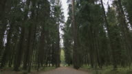 bottom view of pine trees video