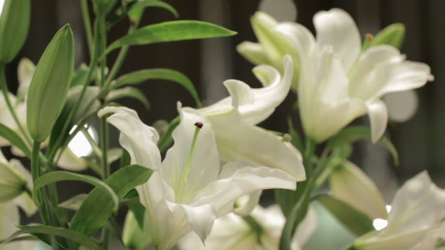 Bouquet of White Lilies video