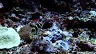 Boxfish video