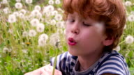 Boy and Dandelions video