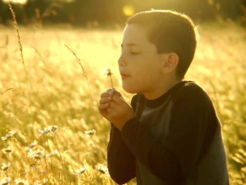 PAL Boy Blowing on a Dandelion video