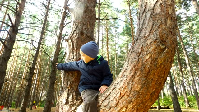 Boy child have planted on tall pine. The boy is very happy that sits on a high tree in the park. Sunday holiday with children in the park. video
