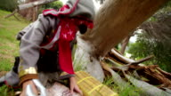 Boy dressing up pirate finding  treasure chest under tree video