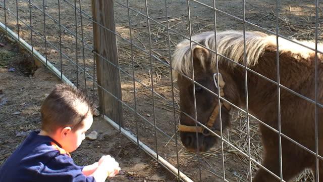 Boy Feeding a Pony video