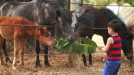 Boy feeding horses video