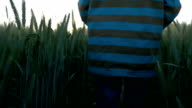 boy goes on a wheat field back view slow motion video