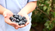 Boy holding blueberries in hands video