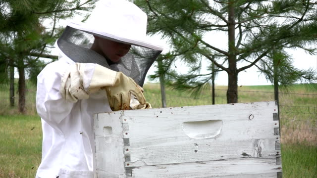 Boy Learning Bees video