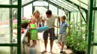 Boy Picking And Eating Home Grown Tomatoes In Greenhouse video