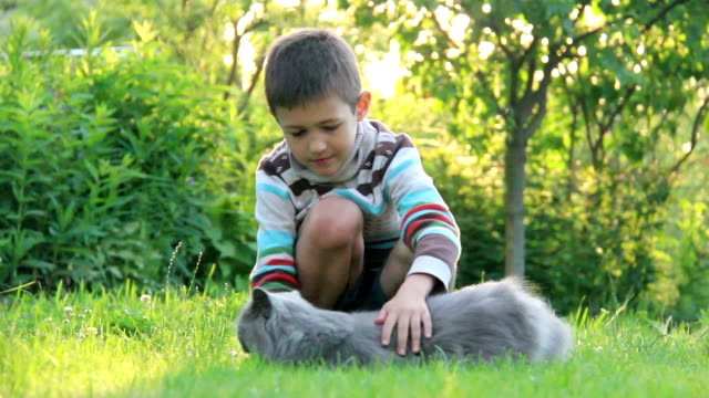 boy playing with a British cat on the grass video