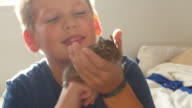 Boy Playing With Pet Degu In Bedroom video