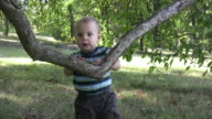 Boy plays with low hanging branch video