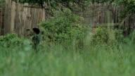 boy pulls a tree branch video