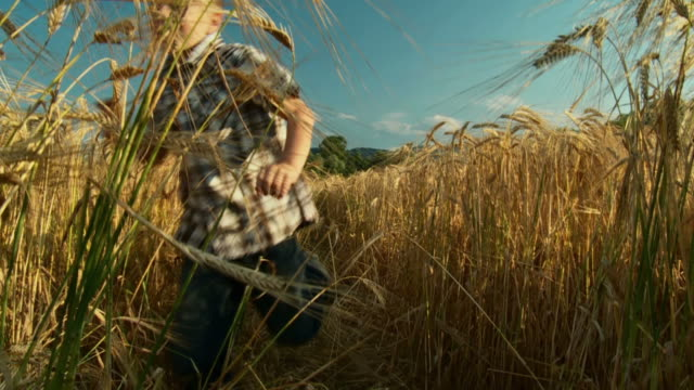 HD SLOW-MOTION: Boy Running In Wheat video