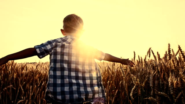 SLO MO Boy running through wheat field with arms outstretched video