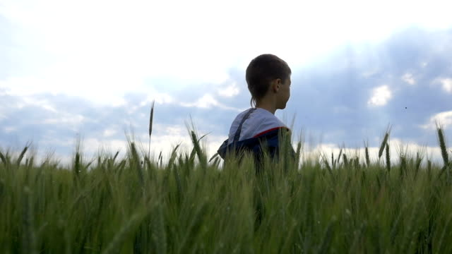 boy runs on a wheat field in the evening slow motion video