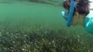Boy Snorkeling In Ocean video
