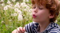 Boy Surrounded by Dandelions video