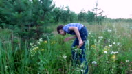 Boy teenager collects ripe wild strawberry. Boy collects berries on the edge of the forest. video