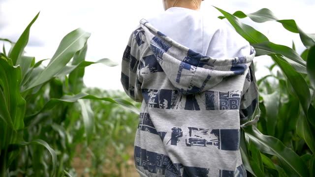 boy walks through a field of tall corn plants, slow motion video