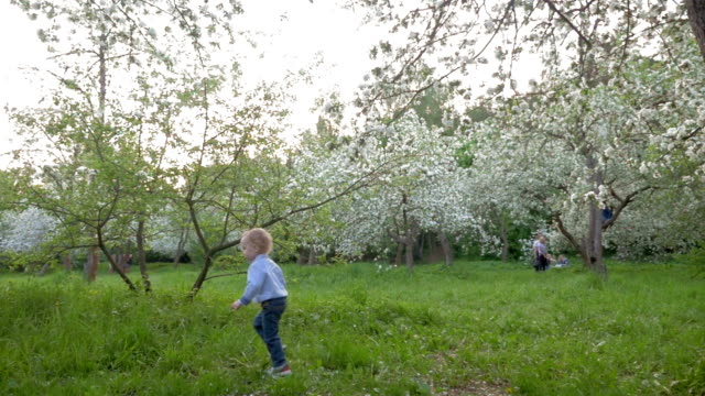 Boy Wandering among Blooming Trees video
