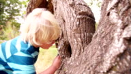 Boy with a magnifying glass studying a tree's trunk video