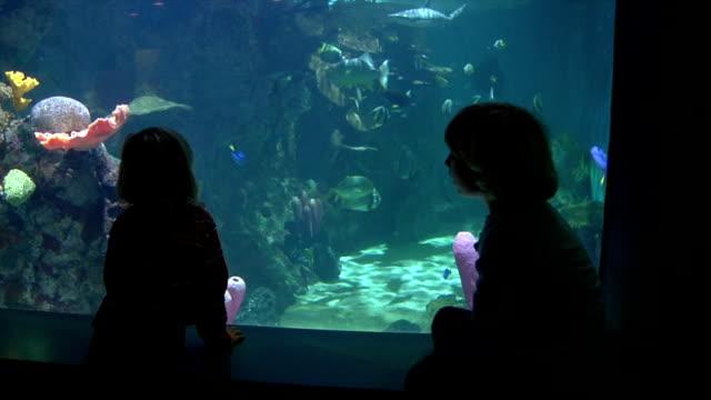 Boys looking At Fish video