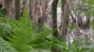 Bracken Ferns and Trees at Reservoire Backwater video