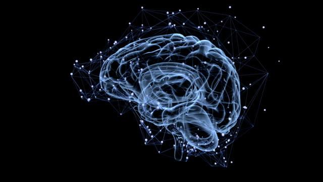 Brain activity video