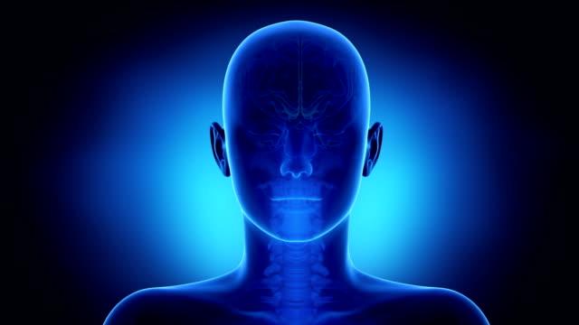 Brain in loop video
